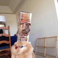 El perro que osó poner su trompa en esta caja. Foto:vía Tumblr