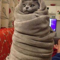Este gato, más envuelto que un pañal. Foto:vía Tumblr
