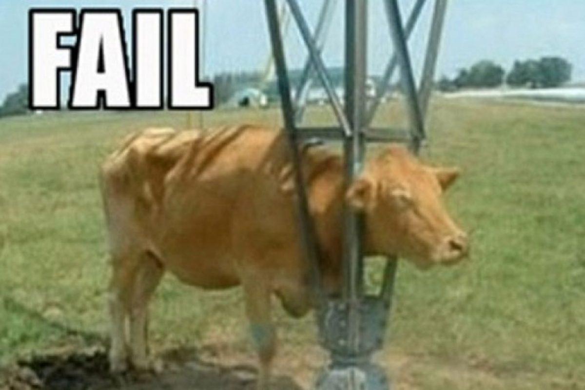 Esta vaca. Foto:vía Tumblr