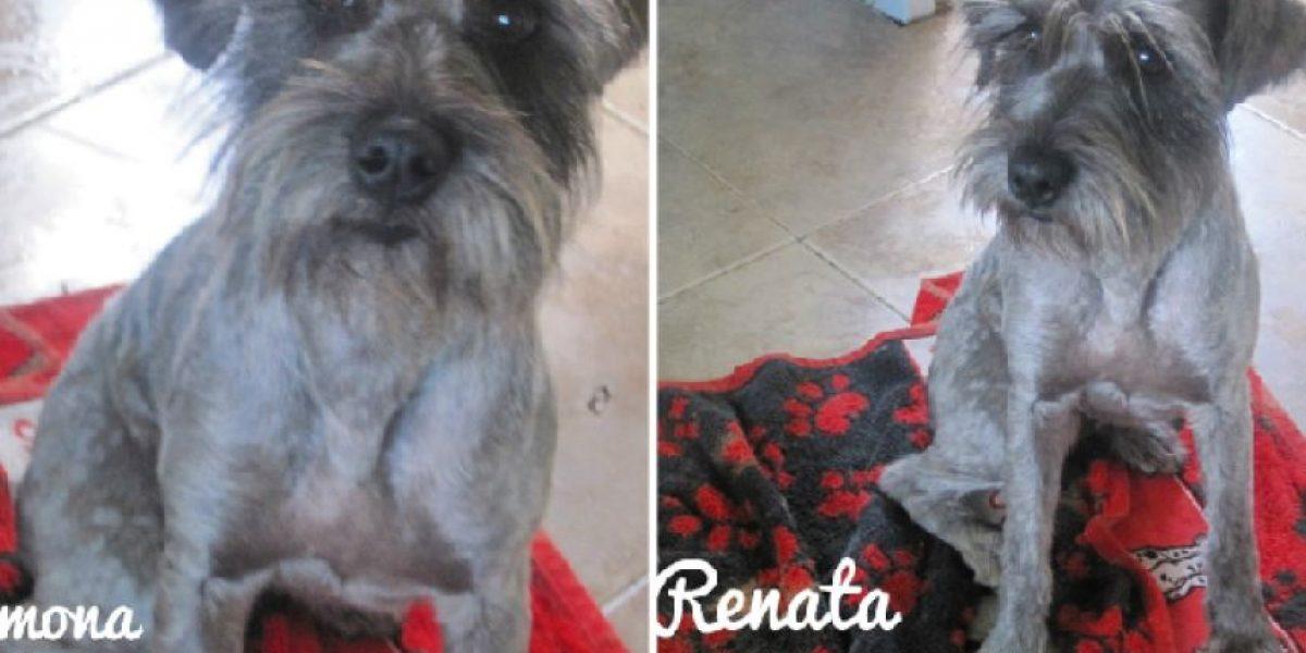 ¡Adopción de perritos! Renata y Ramona están buscando familia