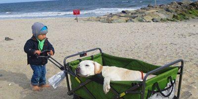 Se llama Poh y es un perro labrador de 14 años al que le diagnosticaron una enfermedad terminal. Su dueño lo ha llevado por varios lugares de Estados Unidos para disfrutar con él los últimos momentos de su vida. Foto:vía Instagram/pohthedogsbigadventure