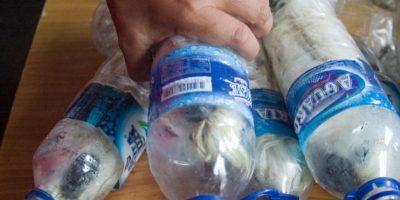 Quedan menos de 7 mil ahora. Pero capturan varios y los encierran en botellas plásticas. Por supuesto, muere el 40% de ellas. Foto:vía Barcroft Media