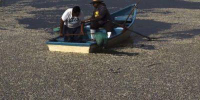 En Cajititlán, México se recogieron 54 toneladas de peces muertos. Foto:AFP