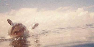 Elissa Sursara es bióloga, periodista y embajadora de la conservación animal, ha destacado por sus participaciones en la revista National Geographic, además de ser activista de la asociación World Wildlife Fund (WWF). La atacó un tiburón y le mordió el vientre, pero ahora lucha para su conservación. Aquí, las mejores imágenes de su Instagram. Foto:Instagram/Elissa Sursara
