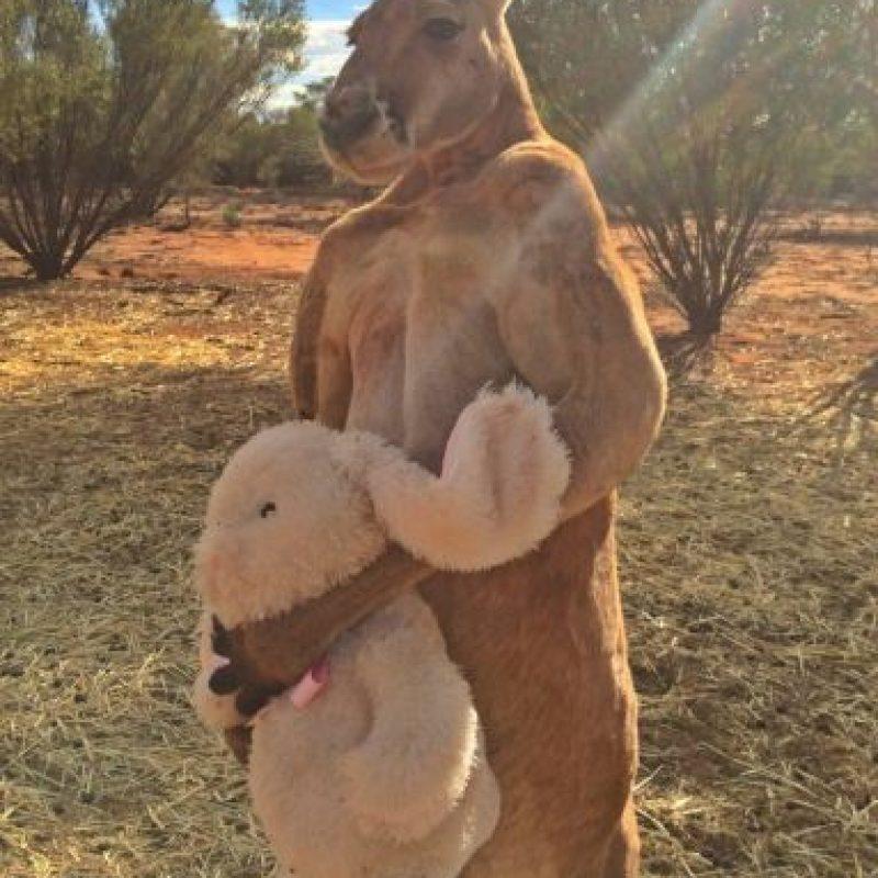 Aunque no lo crean, tiene sólo siete años de edad Foto:Vía Facebook.com/kangaroosanctuary