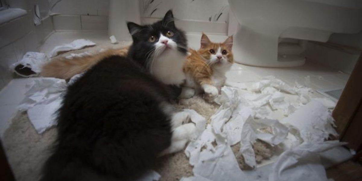 VIDEO: Este gato ahora es