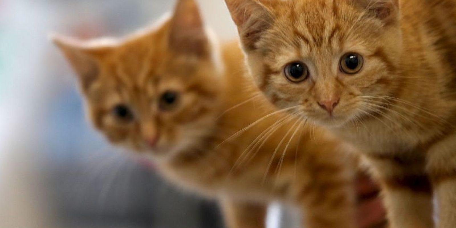 En el video los alumnos bailaban con gatos muertos. Foto:Getty Images