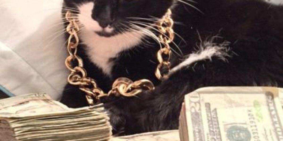 FOTOS: 24 gatos que seguramente tienen mucho más dinero que ustedes