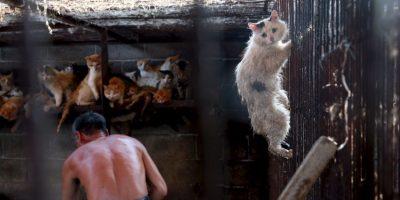 Los animales son conscientes de que serán asesinados. Foto:AP