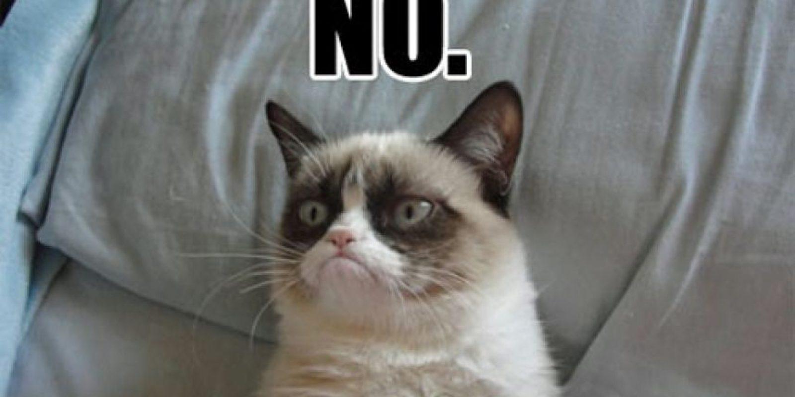 Grumpy Cat incluso factura sus propias líneas de complementos. Foto:vía Tumblr