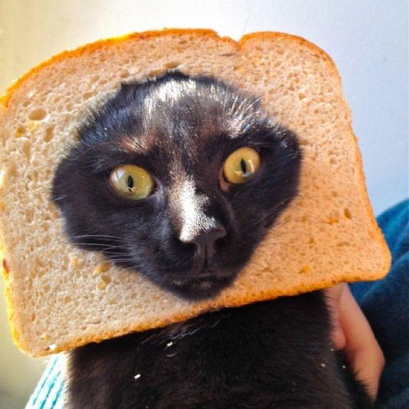 """El más famoso fue """"Grumpy Cat"""". Foto:vía Tumblr"""