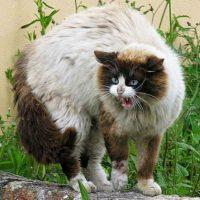 También, las fotos de gatos eran populares hace 3 años. Foto:vía Tumblr