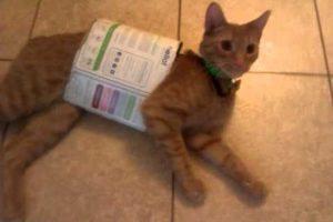 Desde 2012, han circulado varias imágenes de gatos en Internet. Foto:vía Tumblr
