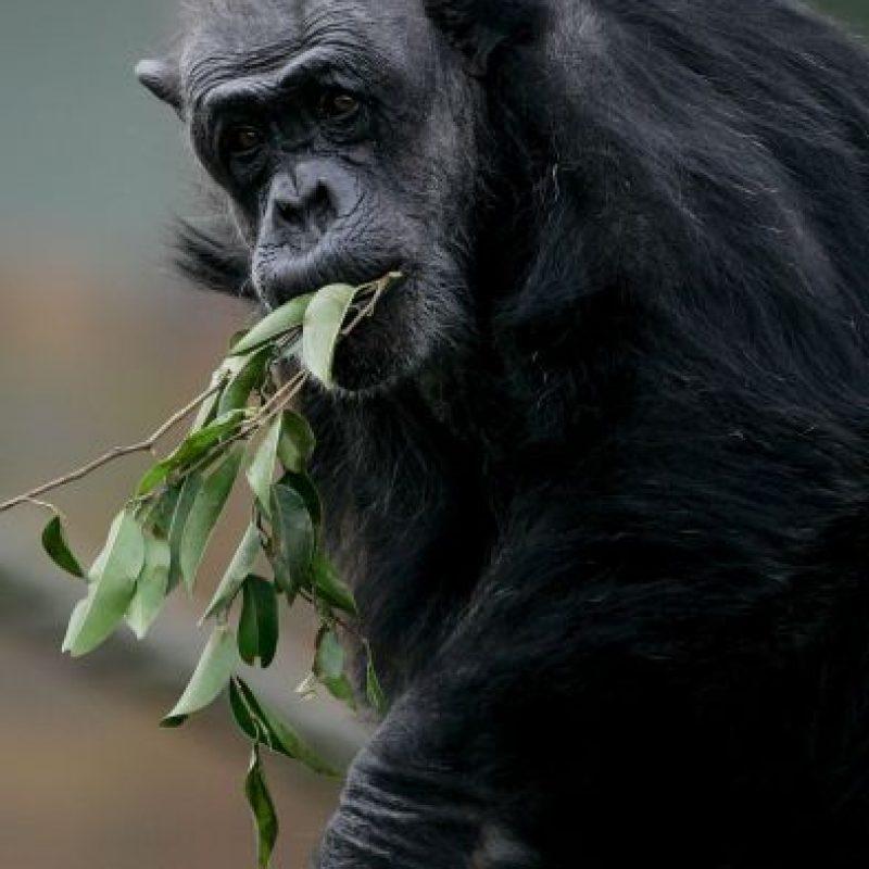 Ellos toman el vino que se fermenta en las palmas de África. Foto:Getty Images
