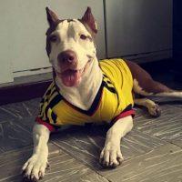 Hasta las mascotas se contagiaron de la 'Fiebre Amarilla' Foto:Twitter / @EstefanyMurciaA