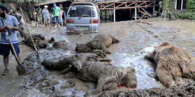 Grandes felinos y osos fueron las especies que más perdió el zoológico. Foto:AFP