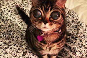 Foto:Facebook Alien Cat Matilda