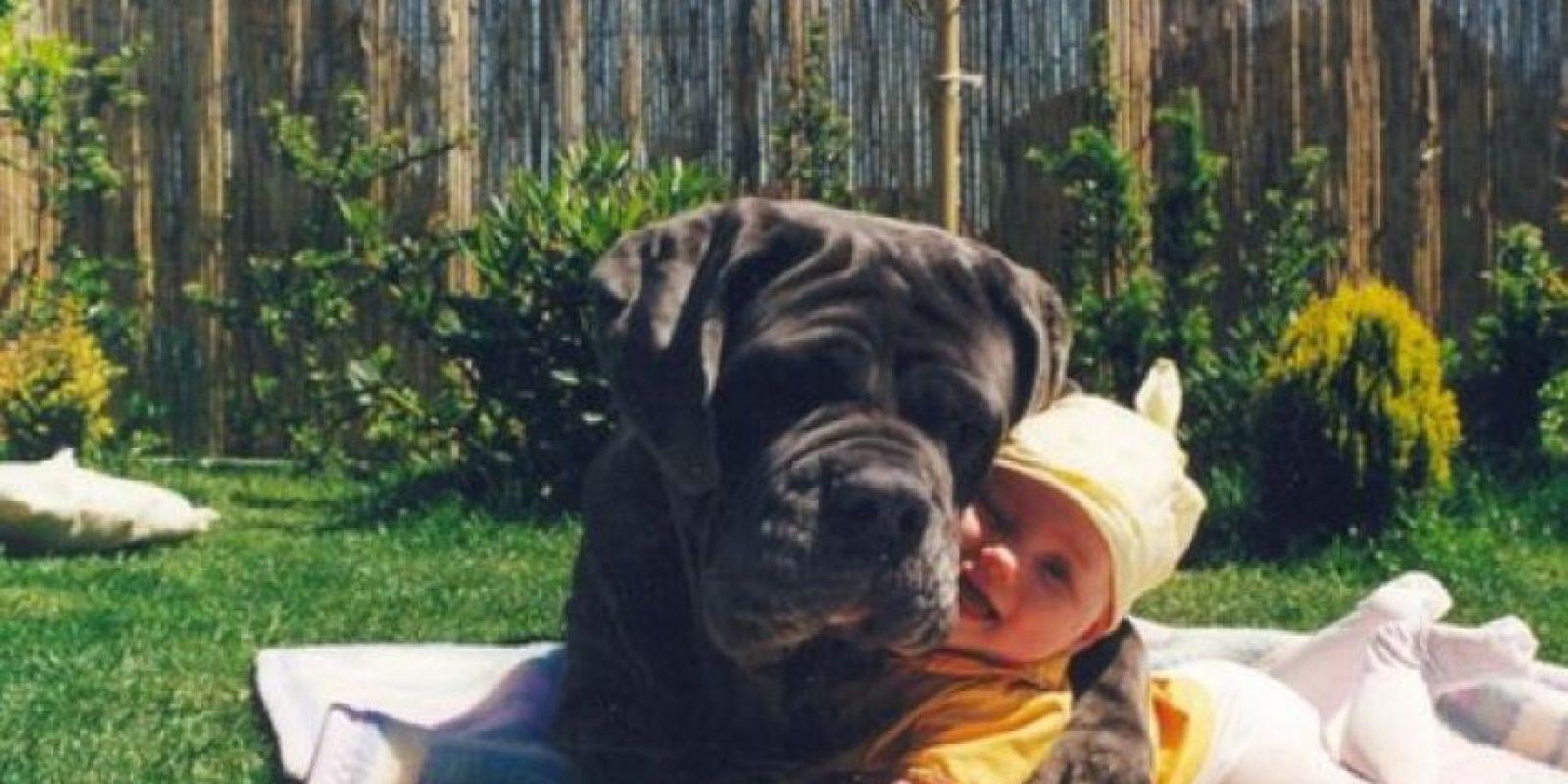 Por ejemplo, a los canes se les solicita recordar en dónde quedó escondido un premio en forma de alimento. Foto:Tumblr.com/tagged/amor/perros