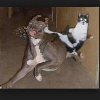 Foto:Tumblr.com/tagged/peleas/graciosas