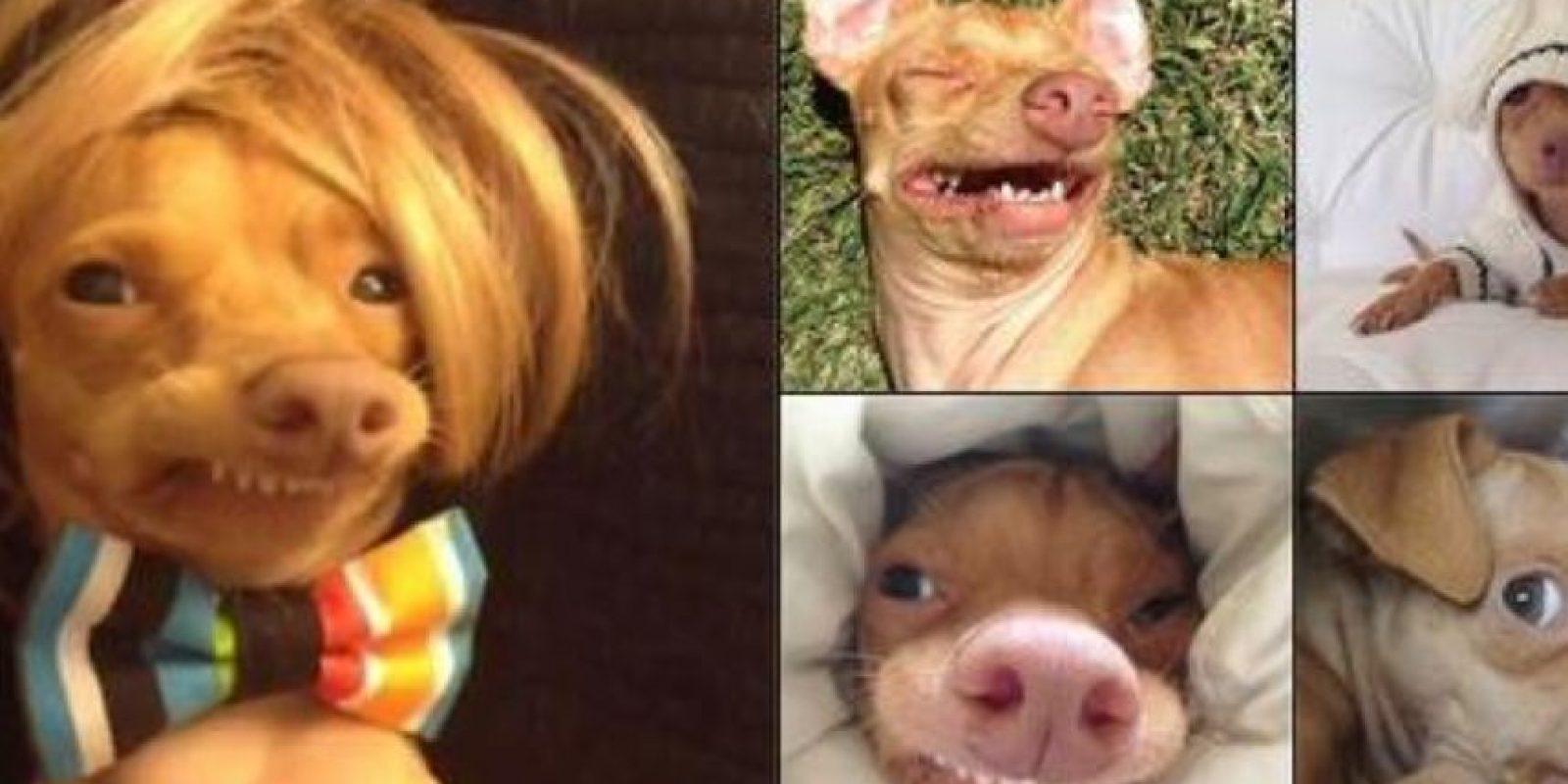 """Tuna saltó a la fama en 2011, con su Instagram """"TunaMeltyHeart"""", según reportó la página Know Your Meme. Foto:vía Twitter"""