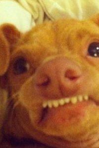 """Es igual a """"Phteven"""", el perro, que en realidad es una chihuahua que se llama Tuna. Foto:vía Twitter"""