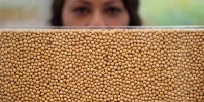 4. Lecitina de soja. Se obtiene a partir de las semillas de soja, la cual contiene fosfatidilserina, uno de los nutrientes que mejora la memoria y la capacidad cognitiva. Se recomienda como complemento alimenticio para niños en desarrollo. Foto:Wikimedia