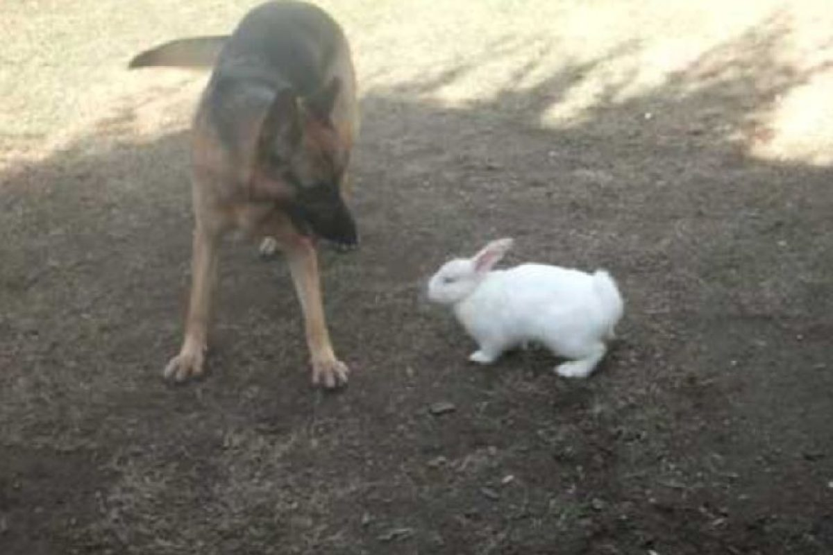 ¿Quién ganará entre este perro y el conejo? Foto:Funny pics