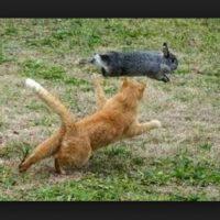 ¡Brinca, corre, huye! Foto:Pinterest