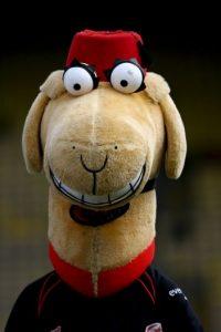 ¿Qué es esto? Al menos sabemos que es la mascota del Saracens de rugby en Inglaterra. Foto:Getty Images