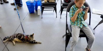 Tara, un felino de siete años y su dueño, Jeremy Triantafilo de 6 años, quien padece autismo Foto:AP