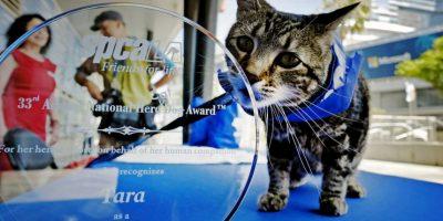 """En su honor, la Asociación para la Prevención de la Crueldad en los Animales de Los Ángeles la condecoró en la edición 33 del premio """"El Perro del Año"""" Foto:AP"""