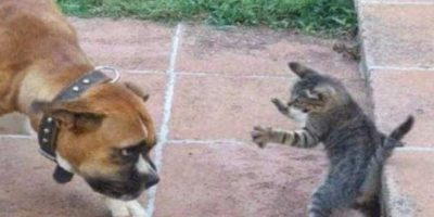 Foto:Tumblr.com/tagged/gatos
