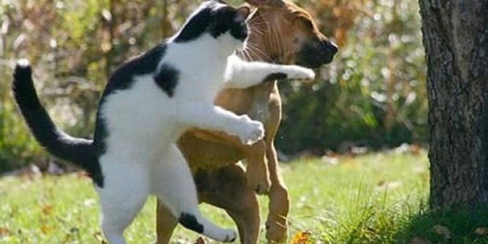 Una dura pelea Foto:Pinterest