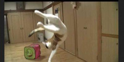 La flexibilidad ante todo Foto:Vía Youtube
