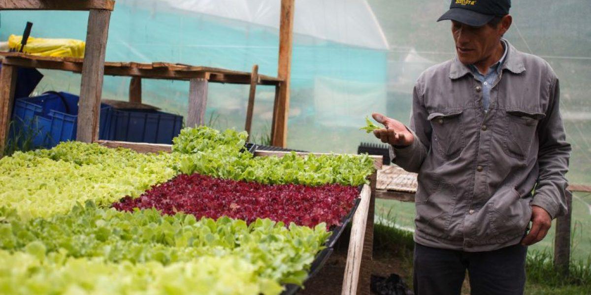 De la granja a la mesa, en Chapinero se cultivan alimentos orgánicos