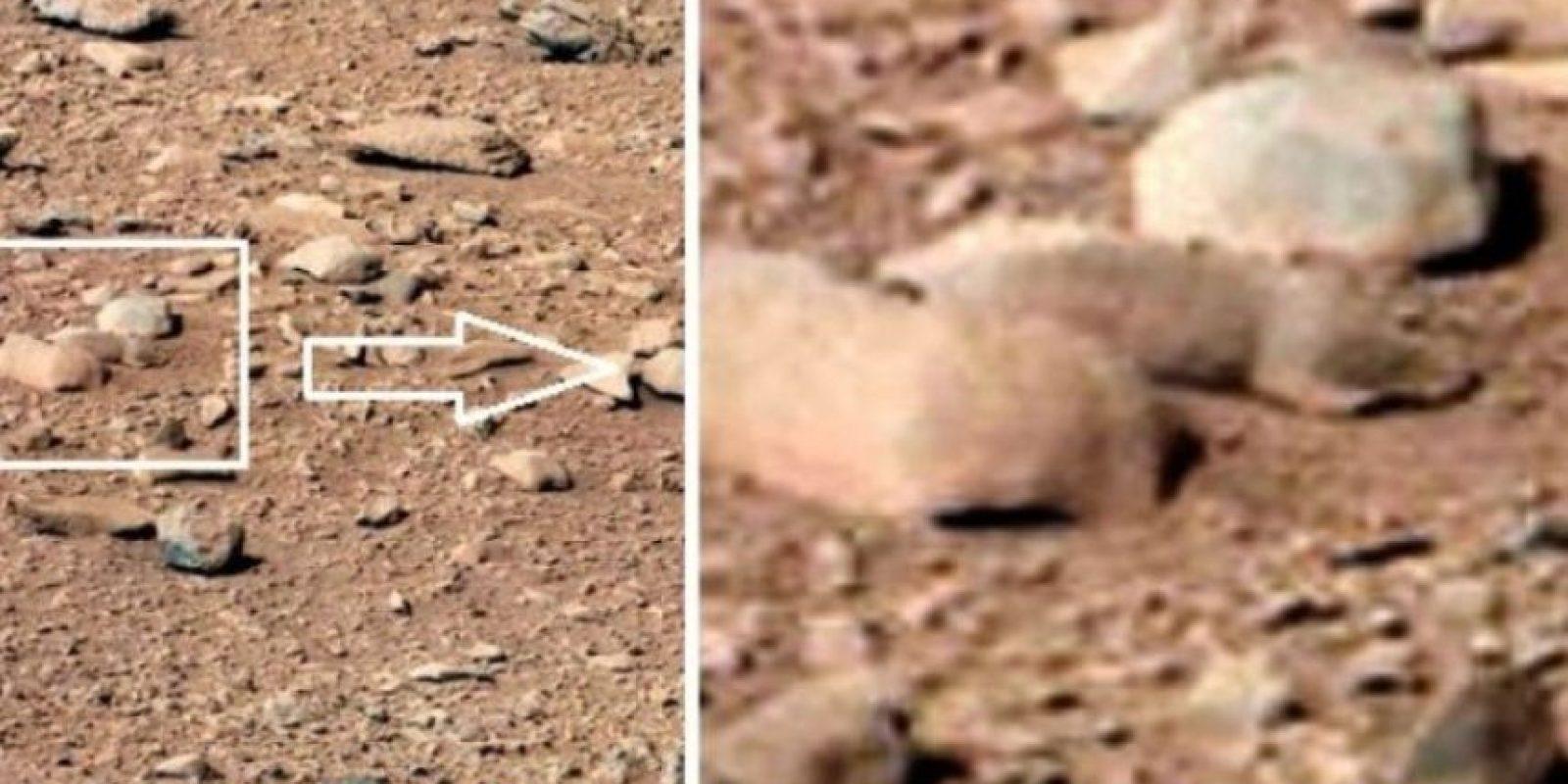 5. Una rata Foto:NASA