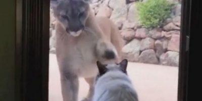 Enfrentándose a un puma Foto:Vía Youtube/TomMabe