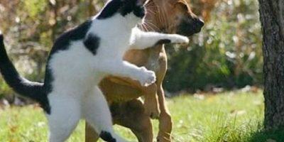 Dándole una lección a este perro Foto:Know Your Meme