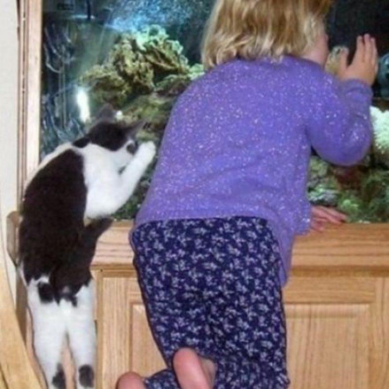 Acompañando a su pequeña dueña Foto:Tumblr.com/tagged/gatos