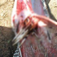 Esto acabó con la serpiente desde adentro. Foto:vía Facebook/Parque Eland
