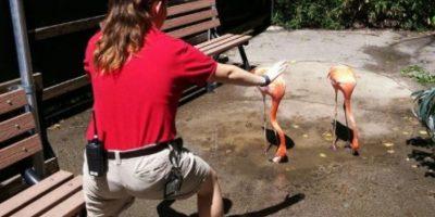 Foto:Dallas Zoo