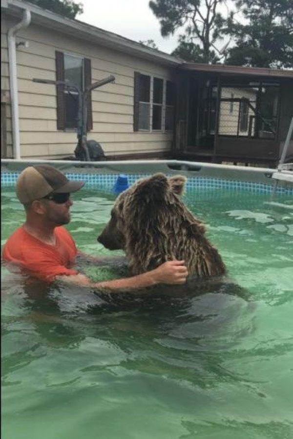 Un video a vuelto a Bruiser un oso viral. Foto:Vía facebook.com/SingleVision
