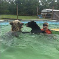 A su fiesta de piscina también invitó a un oso negro. Foto:Vía facebook.com/SingleVision