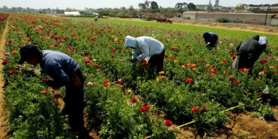 12. Agricultura y pesca- 2.5% Foto: Getty Images