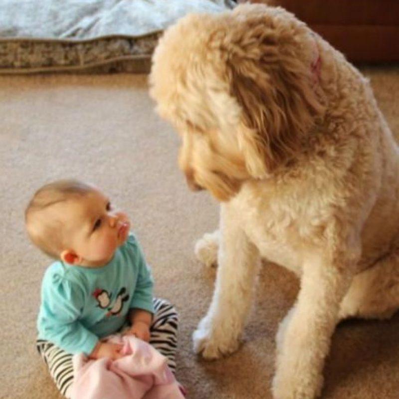 ¿Quién no miraría así a ese lindo bebé? Foto:Reddit