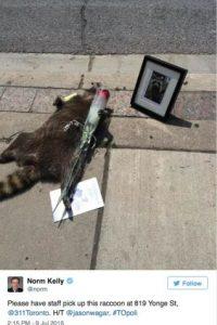 Seis horas después del anuncio, el mapache seguía ahí. Fue cuando el usuario Jason Wagar publicó la imagen del memorial que las personas hacían. Le pusieron una rosa y una foto de un mapache en vida. Foto:Twitter.com/JasonWagar