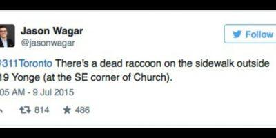 Todo comenzó a las 9 horas (tiempo local). Un ciudadano avisó de un mapache muerto en una acera y pidió que llegaran los servicios de limpieza a llevarse el cadáver. Foto:Twitter.com/JasonWagar