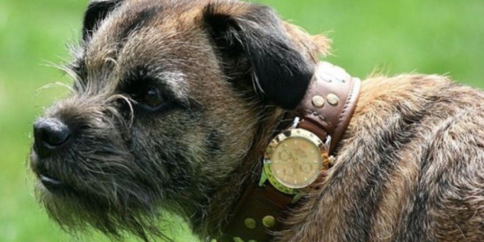 Rolex para perro Foto:Instagram