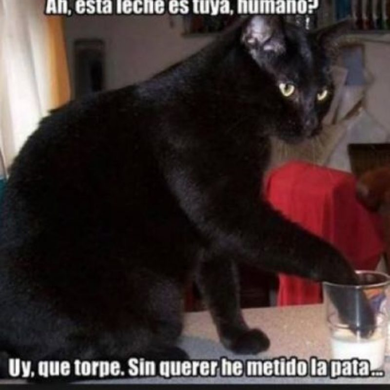 Suelen ser muy traviesos, como este gato. Foto:Tumblr