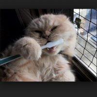 A ciertos gatos les importa mucho el aseo dental. Foto:Tumblr